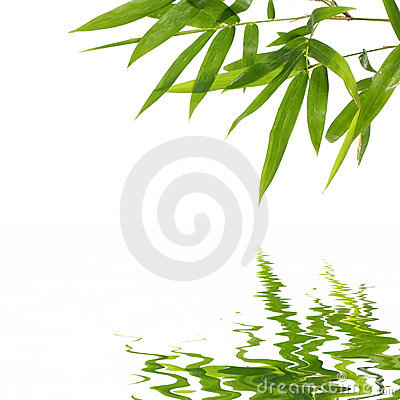 Free Bamboo Leaves Stock Photo - 7942800