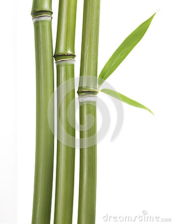 Free Bamboo Leaves And Stalks Royalty Free Stock Photos - 27301008