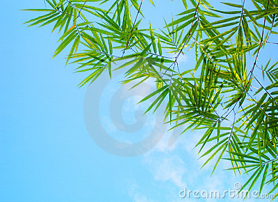 Bamboo leaves blue sky