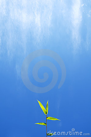 Bamboo Leaves With Blue Sky Background