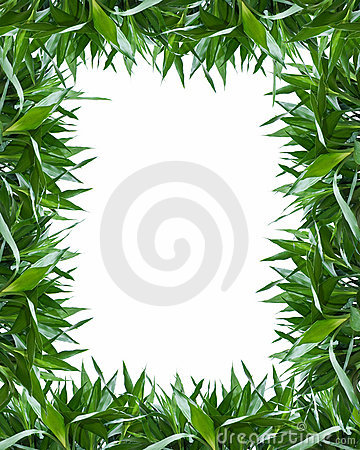 Bamboo leaves frame background