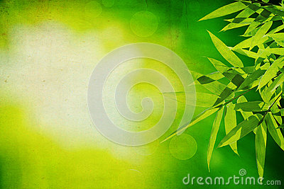 Bamboo leaves with green grunge