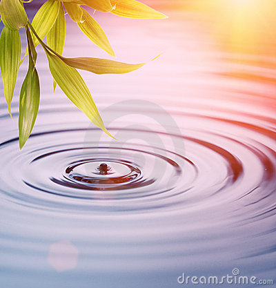 Free Bamboo Leaves Over Water Stock Image - 10071391