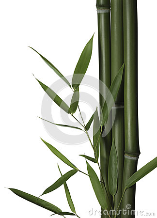 Bamboo leaves and stalks