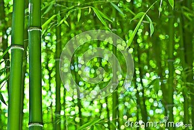 Bamboo like zen