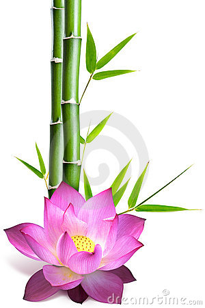 Bamboo and lotus flower