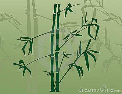 Bamboo in the Mist