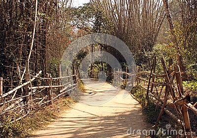 Bamboo Pathway through Kuruva Island