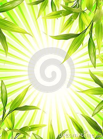 Bamboo plant frame