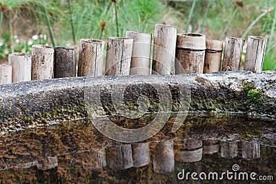 Bamboo Reflected Botanical Gardens Sao Paulo Brazi