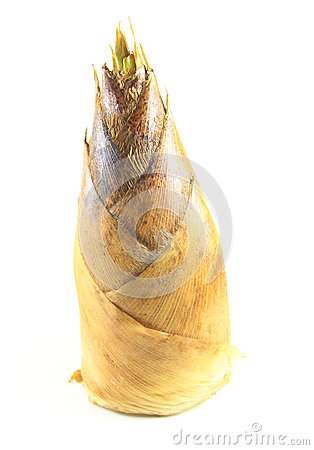 Free Bamboo Shoot Stock Image - 24654561
