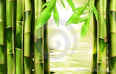 Bamboo shoots with water
