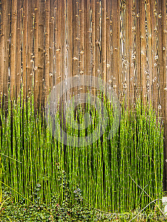 Free Bamboo Shots On Wood Royalty Free Stock Images - 35099959