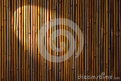 Bamboo Spotlight Background