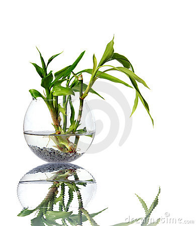 Bamboo sprouts in a glass vessel