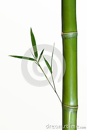 Bamboo Stalk Royalty Free Stock Image - Image: 10464796