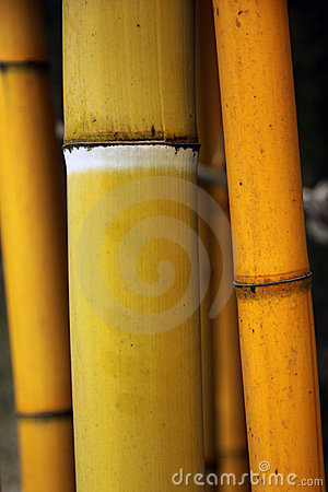 Free Bamboo Stalk Stock Photography - 19920172