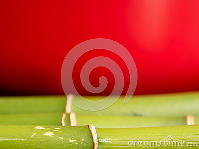 Bamboo on red background