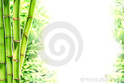 Bamboo Stems and Wild Grass over White Background