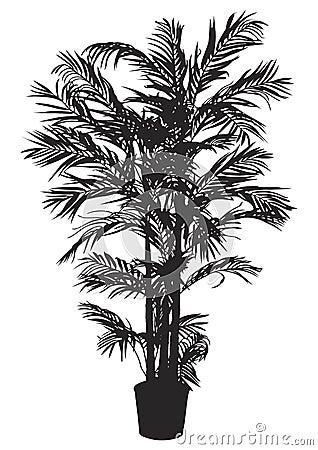 Bamboo, tree