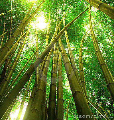 Free Bamboo Tree 3 Stock Images - 1083794