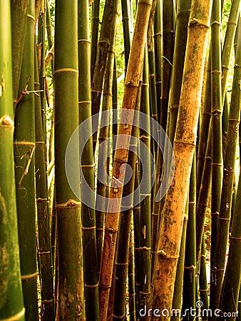 Bamboo tree 89