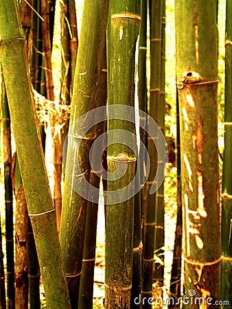 Bamboo tree 98