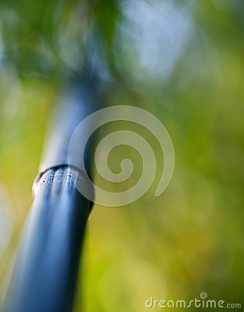Free Bamboo Tree Trunk Royalty Free Stock Images - 54538249