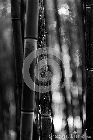 Free Bamboo Tree Trunk Black And White Stock Image - 54538251