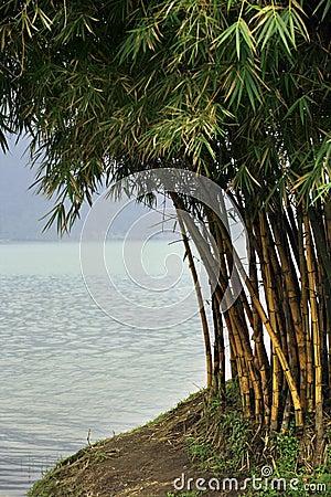 Free Bamboo Trees Stock Photo - 7133120