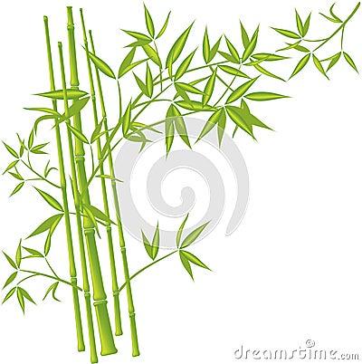Bamboo, vector