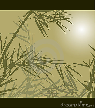 Bamboo, vector illustration