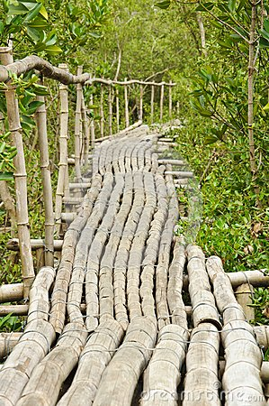 Bamboo walkway in Mangrove forest