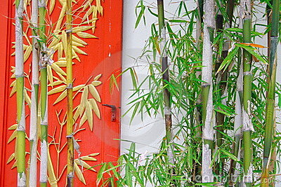 Bamboo And Window