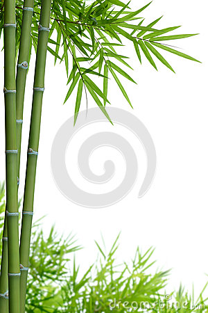 Free Bamboo With Leaves Royalty Free Stock Image - 25428266