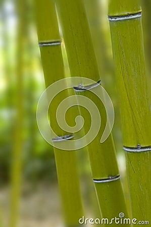 Free Bamboos. Stock Photos - 12658803