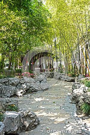 Bamboos in a calm garden