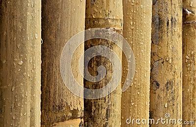Bambu molhado
