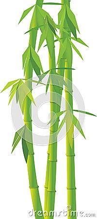 Bambu verde do vetor