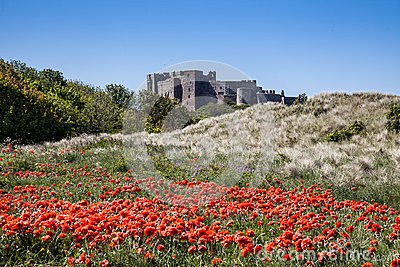 Bamburgh Castle and poppys