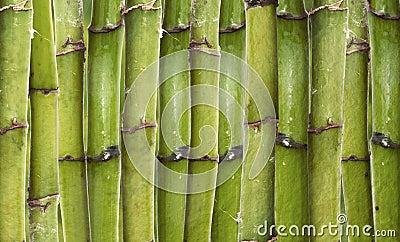 Bambusbeschaffenheit