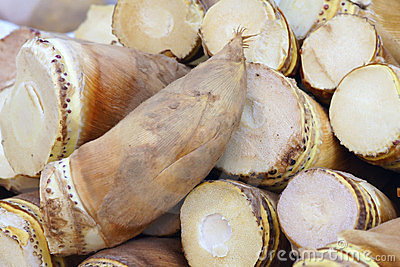 Bambuskott