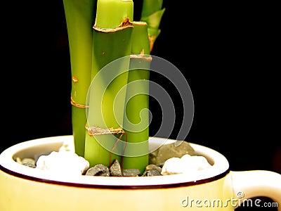 Bambusowa kubek