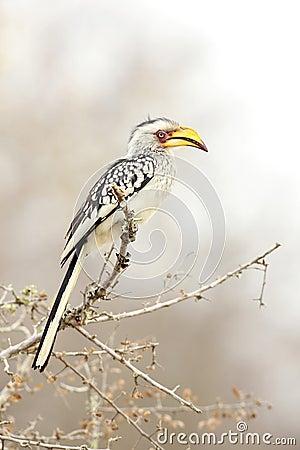 Banana Bird
