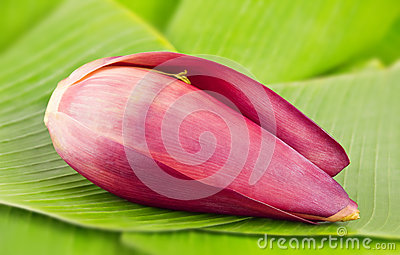 Banana blossom on leaves