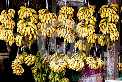 Banana fruit seller Editorial Image