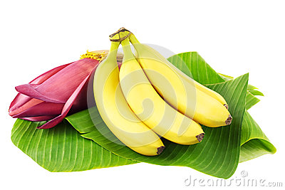 Banana fruits with blossom