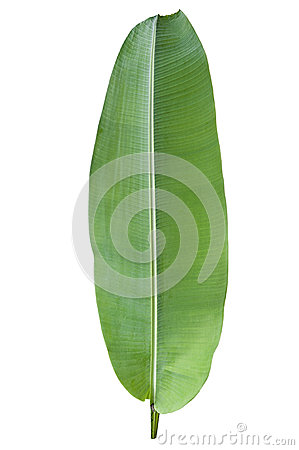 Free Banana Green Leaf Stock Images - 41821034