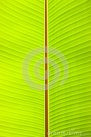 Free Banana Leaf Royalty Free Stock Photos - 25792018