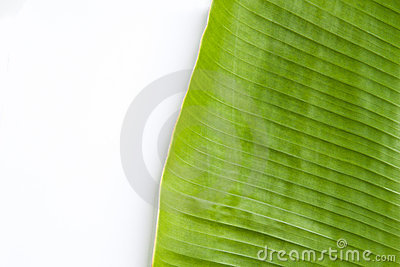 Banana leaf in white background